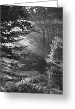 Deep In The Woods Greeting Card