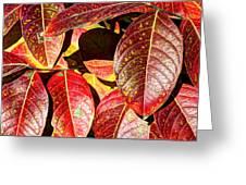 Deep Into Autumn Greeting Card