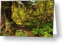 Deep Into The Hoh Rain Forest Greeting Card