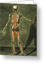 Deep Muscular System Of The Back Greeting Card