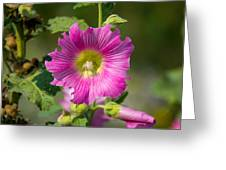 Deep Pink Beauty Greeting Card