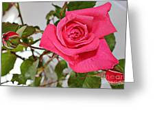 Deep Pink Rose - Summer - Rosebuds Greeting Card