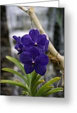 Deep Purple Orchard Greeting Card