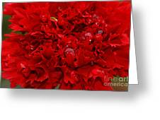 Deep Red Carnation Greeting Card