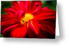 Deep Red Dahlia With Yellow Center Greeting Card