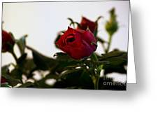 Deep Red Roses Greeting Card
