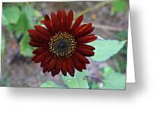 Deep Red Sunflower Greeting Card