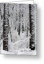 Deep Snow In The Forest Greeting Card