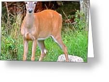 Deer 102 Greeting Card
