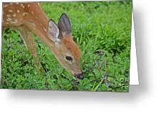 Deer 12 Greeting Card