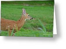 Deer 13 Greeting Card