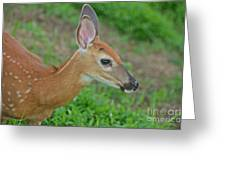 Deer 17 Greeting Card