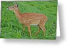 Deer 19 Greeting Card
