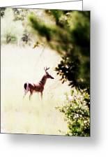Deer 2 - Buck - White-tailed Greeting Card