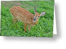 Deer 20 Greeting Card