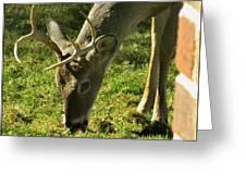 Deer 2009 Greeting Card