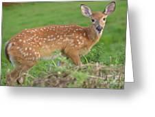 Deer 24 Greeting Card
