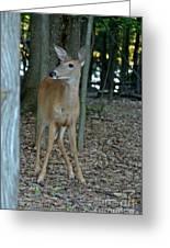 Deer 3 Greeting Card