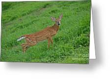 Deer 6 Greeting Card