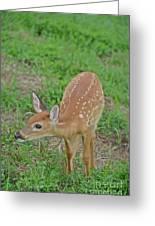 Deer 7 Greeting Card
