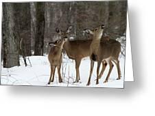 Deer Affection Greeting Card
