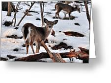 Deer And Snow Greeting Card