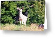 Deer Approaching Greeting Card