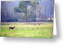 Deer At Cades Cove Greeting Card