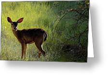 Deer At Home Away From Home Greeting Card