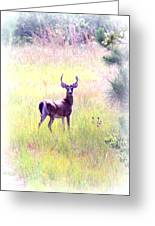 Deer - Buck - White-tailed Greeting Card