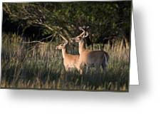 Deer By Belfry Montana Greeting Card by Roger Snyder