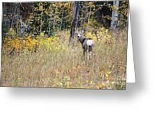 Deer Camoflauged Greeting Card