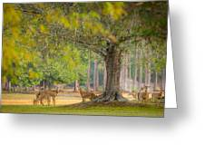 Deer Crossing Greeting Card