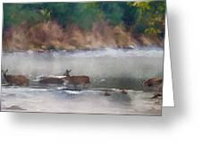 Deer Crossing Stream Panoramic Greeting Card