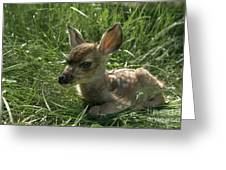 Deer Fawn Greeting Card