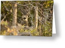 Deer Frame Greeting Card