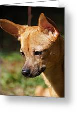 Deer-head Chihuahua Greeting Card