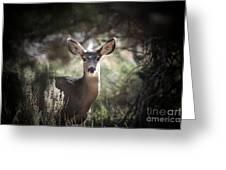 Deer I Greeting Card