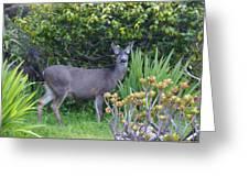 Deer II Greeting Card