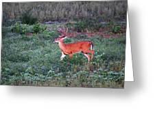 Deer-img-0113-001 Greeting Card