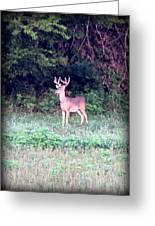 Deer-img-0122-7 Greeting Card