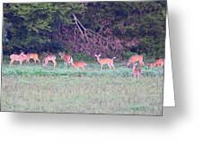 Deer-img-0128-005 Greeting Card