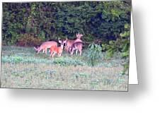 Deer-img-0156-002 Greeting Card