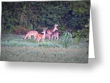 Deer-img-0158-001 Greeting Card