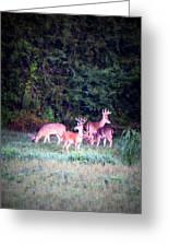 Deer-img-0158-003 Greeting Card