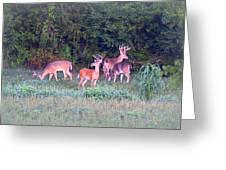 Deer-img-0160-005 Greeting Card