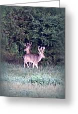 Deer-img-0177-001 Greeting Card