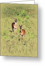 Deer-img-0283-001 Greeting Card