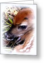 Deer-img-0349-002 Greeting Card
