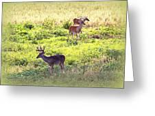 Deer - 0437-004 Greeting Card